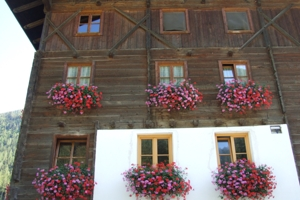 Visits to artistic sites and territory. Things to do in Bolzano
